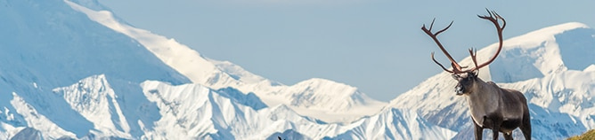 Veja todos os Cruzeiros para o Alasca