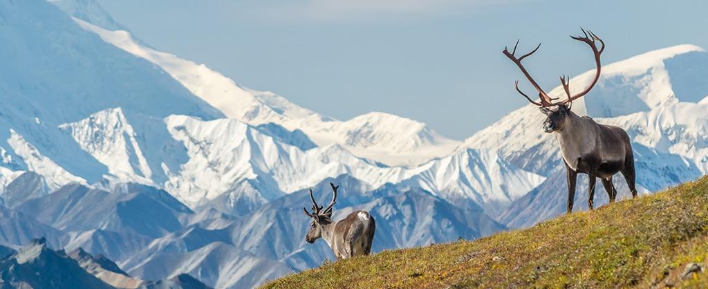 Alaska-Kreuzfahrten anzeigen