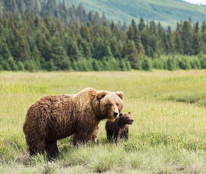 Alaska_HomepageBlock_011619.jpg