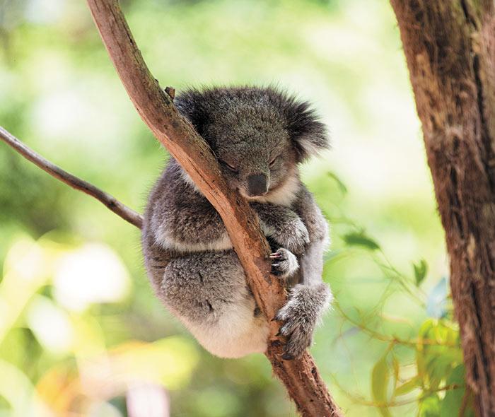 AustraliaNewZealand_HomepageBlock_011619.jpg