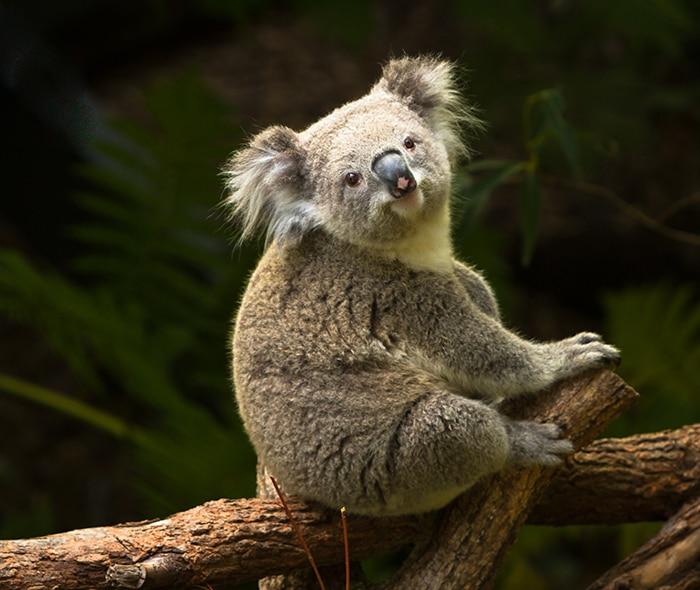 Kangaroos & Koalas Sundown Adventure
