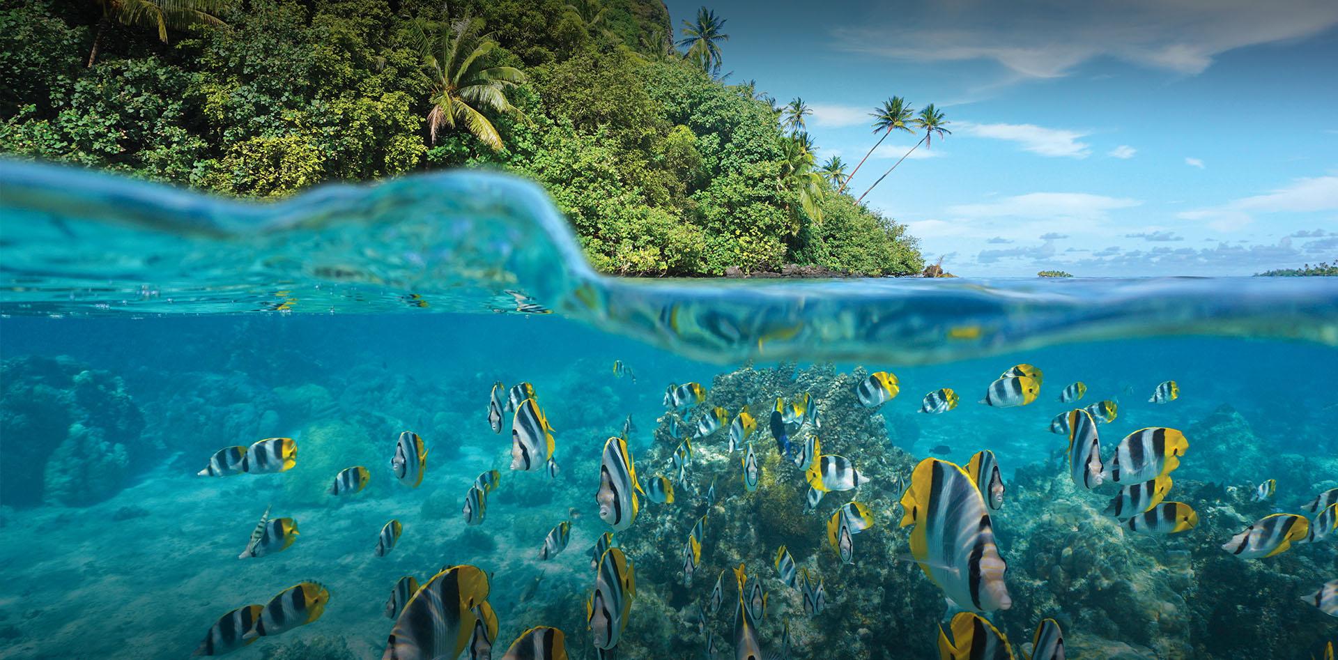 No Pacífico Sul